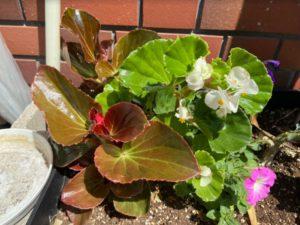 花壇のわんちゃん2-1