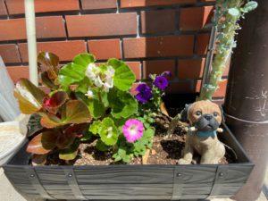 花壇のわんちゃん2-2